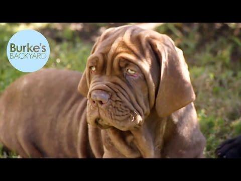 Burke's Backyard, Hidden Pet Costs