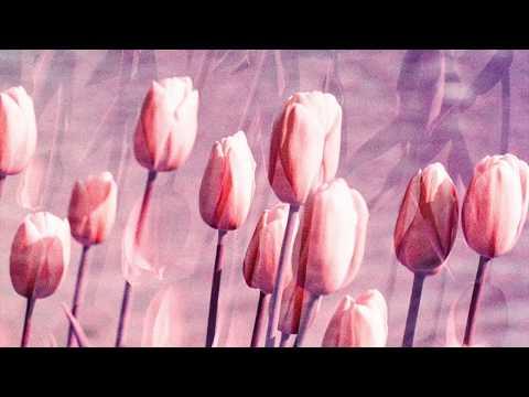 ☼ Flamingosis - Is it worth it? (lemme work it)