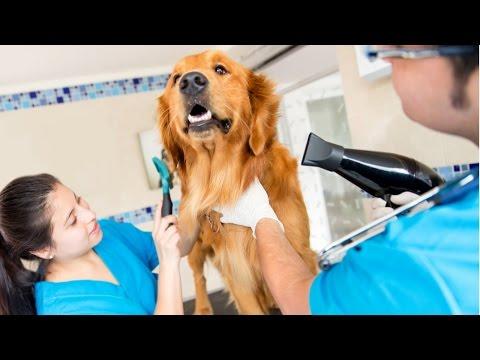 Montar um Pet Shop