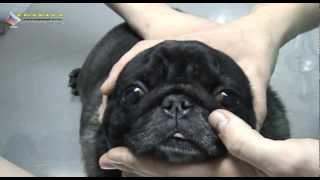 Лекция №4 Первые признаки болезни глаз собак и кошек