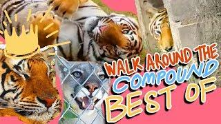 WATC - BEST of Episodes 201-300 !!!