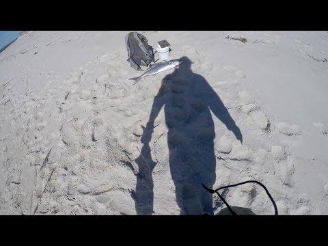 Surf Fishing - CUTS & GUTS Killer Bluefish Video
