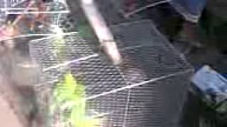 Selling birds in cages- How cruel in barrackpore