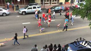 STQ Presents: 2015 San Diego Gaslamp Pet Parade (Full Parade)