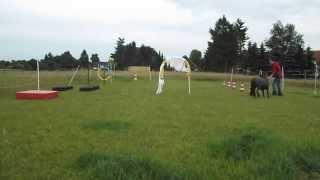 Horse Agility, Clickertraining Mit Minishetty