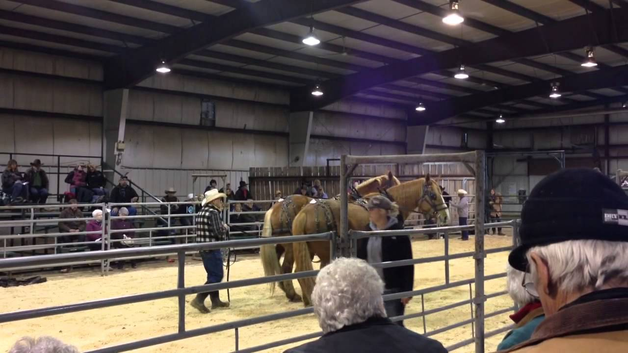 Olds Regional Exhibition | Agriculture, Community, Youth ...