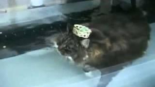 Как худеют коты.flv