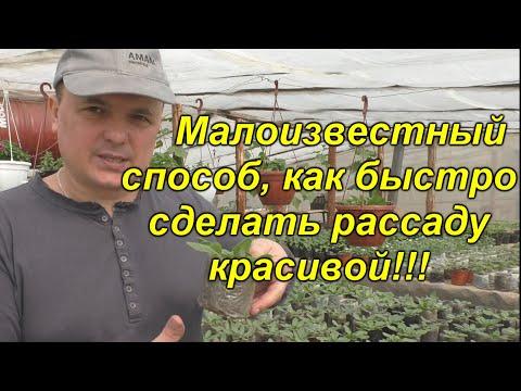 Мы делаем так с рассадой всегда! Открываем секреты красивой и здоровой рассады!(проверено!!!)