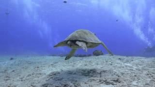 Amazing Underwater Oahu - 4K