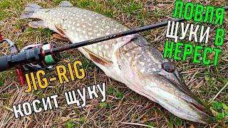 КАК ОБХИТРИТЬ ЩУКУ В НЕРЕСТ и ПОЙМАТЬ Рыбалка на щуку 2020 Ловля Щуки на спиннинг на джиг риг