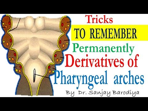 Pharyngeal Arches now made very easy to remember permanently with these Tricks