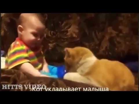 Много-много смешных и трогаетльных котиков