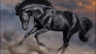 Самые красивые лошади!!!