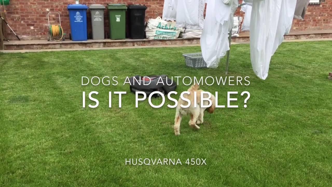 Husqvarna 450X Automower Challenge with Dogs