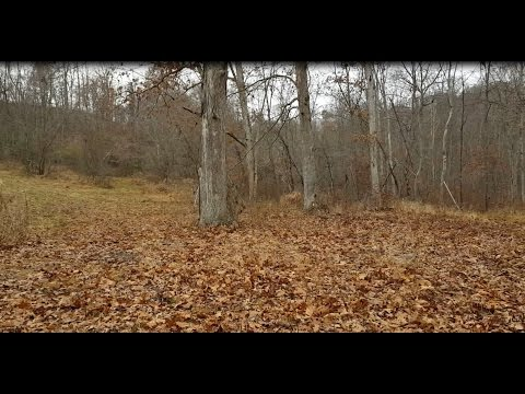 OPENING DAY OHIO SHOTGUN DEER SEASON - hunting vlog - 2016 deer season