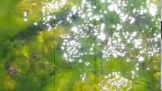 видео Улотрикс