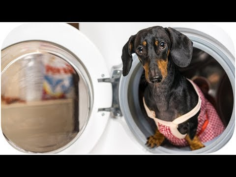DOG HOUSEKEEPER! Funny animal video!
