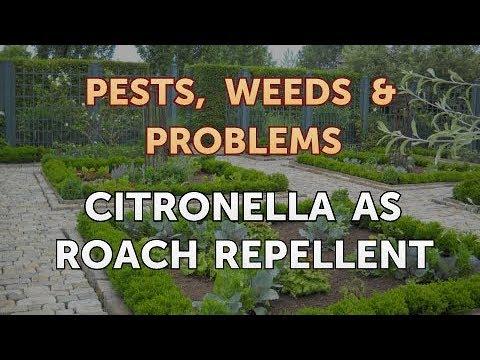 Citronella As Roach Repellent
