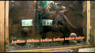 X Box Kinect vs Sony Playstation Move: Ollie the Kelkoo Octopus predicts the winner
