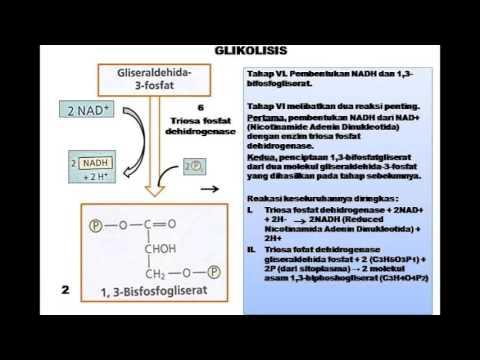 animasi glikolisis