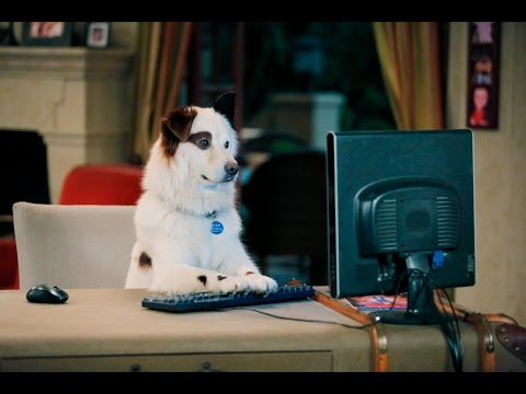 Dog With A Blog - Stan's Blogs