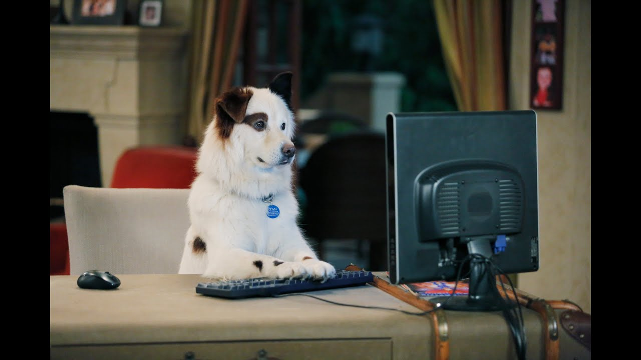 Dog With A Blog - Stan's Blogs - YouTube | 3000 x 2000 jpeg 506kB