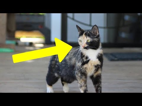 Homeless Cat Brings