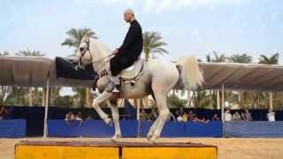 Mizmar Saidi ◕▬▬•●◕●•▬▬◕ مزمارصعيدي