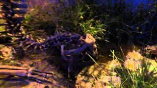 children s museum indianapolis duckbill dinosaur