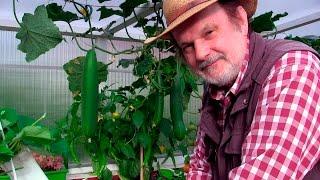 HOCHBEET TRAUM - Hochbeet im Jahreslauf: Salat+Blumenkohl, Gurken+Tomaten Film: 42