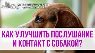 Как улучшить послушание и контакт с собакой на прогулке?