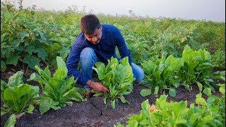 Dal Chawal Recipe | Indian Dal and Rice Recipe by Nikunj Vasoya