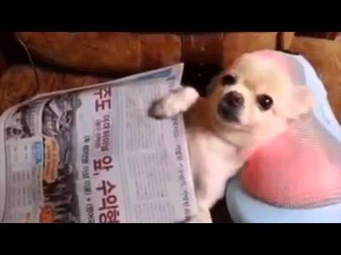 The Best Dog Vine of 2015