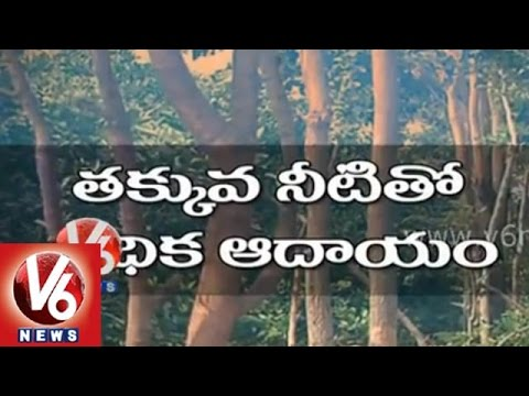 Cultivation of Red Sandal trees in Nalgonda
