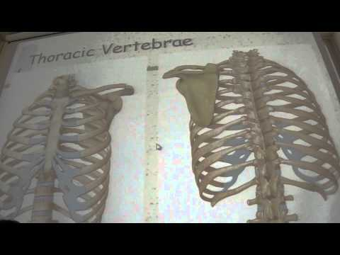 Anatomy - Vertebral Column and its Joints