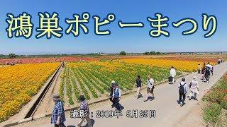 鴻巣ポピーまつり [4K] thumbnail