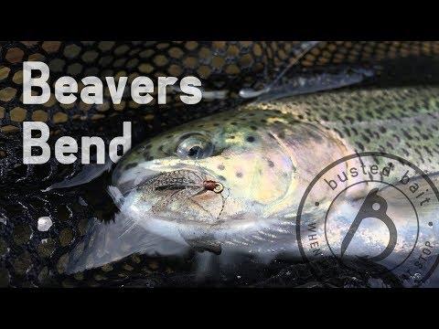Fly Fishing: Beavers Bend May 2018