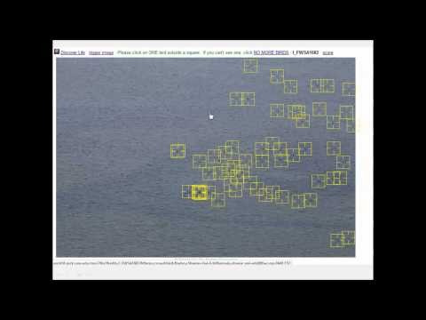 Crowdsourcing Aerial Survey Photo Analysis