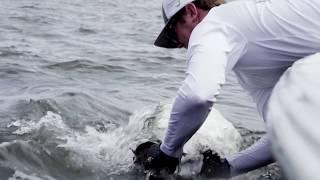 Glass Minnow Tarpon Fishing