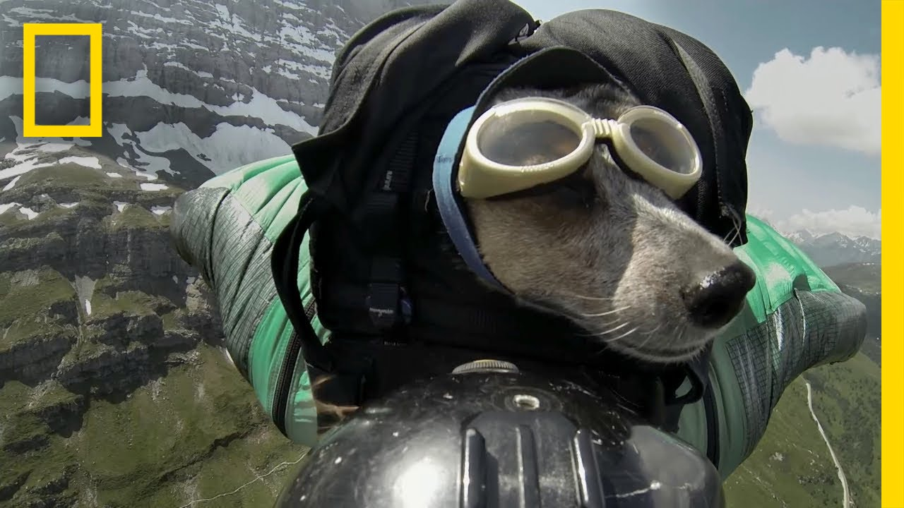 Dean Potter BASE Jumps With His Dog | National Geographic