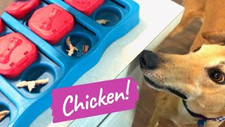 Greyhound vs. Dog Puzzle Game