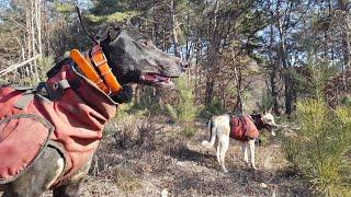 자연인과 사냥개/ 猎犬2