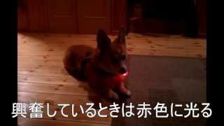 犬の心拍数から、犬の興奮度を表現するライトです!(特許出願中) 興奮...