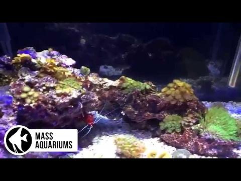 10 Gallon Nano Saltwater Reef: 5 Months, Mandarin Experiment Take 2