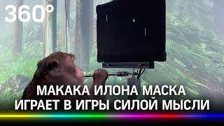 Макака Илона Маска играет в игры силой мысли. Как эксперимент поможет людям с параличом?