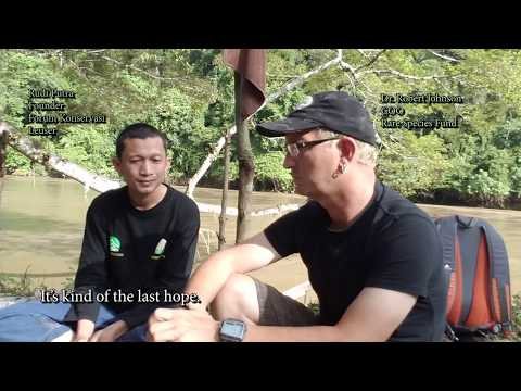 Rebuilding Soraya Station - Rare Species Fund Conservation in Sumatra