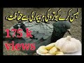 GARLIC FOR BIRDS PIGEON TREATMENT WITH GARLIC BIRDS Health Care mp3