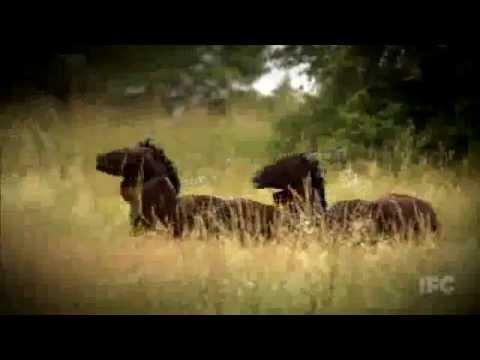 "WKUK - The Civil War on Drugs (""Horse"" part)"