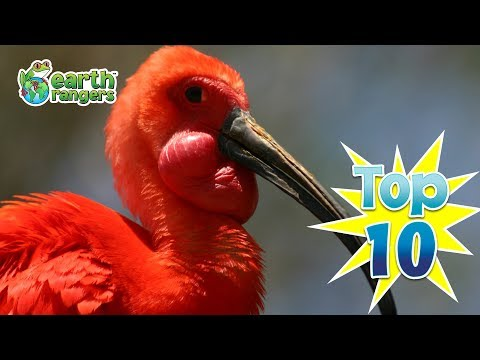 Top 10: Weirdest Looking National Birds