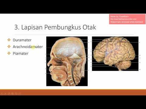 Anatomi Sistem Saraf #1 - Pelindung Otak